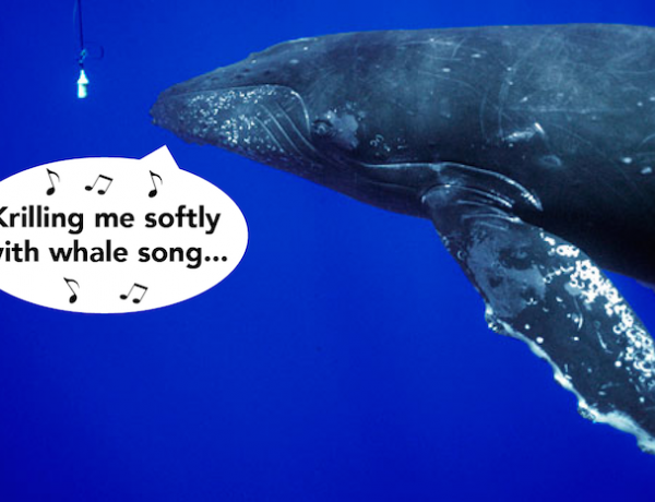 whalesong, songwriting for whales
